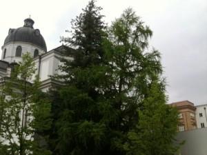 ginkgo kollegienkirche