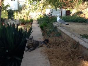 Katze und Möwe