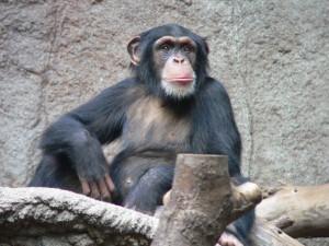 Will er genauso wie ein Mensch sein? (Foto: Thomas Lersch/http://creativecommons.org/licenses/by-sa/3.0/)