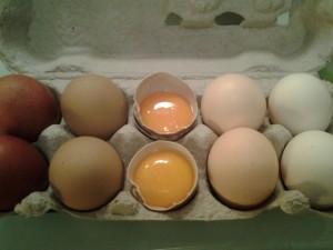 gute, biologische Eier von Weieregg